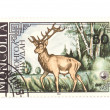 Postage stamp deer macro — Stock Photo