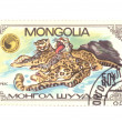 Stock Photo: Postage stamp panthera macro