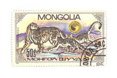 Postage stamp panthera closeup — Stock Photo