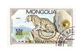 Postage stamp panthera close up — Stock Photo
