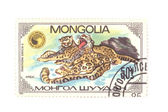 Postage stamp panthera macro — Stock Photo