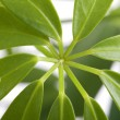 Window plants close up — Stock Photo