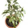 Window plants on white closeup — Stock Photo