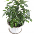 Window plants on white — Stock Photo