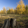 Stub in autumn park — Stockfoto