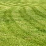 Lawn — Stock Photo #1604279