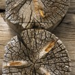 Logs — Stock Photo #1604334