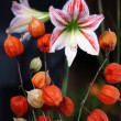 Physalis and amaryllis — Stock Photo