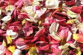 Rose-petals — Stock Photo