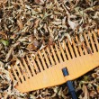 Rake and dry leaves — 图库照片