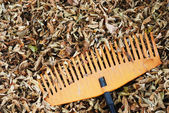 Rake and dry leaves — Stock fotografie