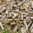 Вig heap of birch fire wood — Stock Photo