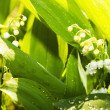 Gardens grass with the lilies — Stock Photo #1669420