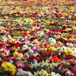 Carpet from flowers at the monument - Stock Photo