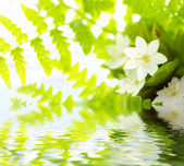 White Flowers and green leafs — Stock Photo