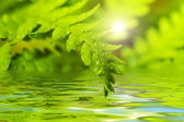 Fern leaf reflected in water — Stock Photo