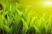 Ogrody trawa z liliami — Zdjęcie stockowe