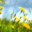 Stock Photo: Field flowers (shallow dof)