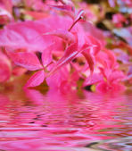Autumn leaves reflected in water — Stock Photo