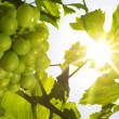 Grapes under the sun (shallow DOF) - Stock Photo