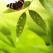 Butterfly on the leaf — Stock Photo #1726906