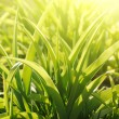 Gardens grass, sunny morning - Stock Photo