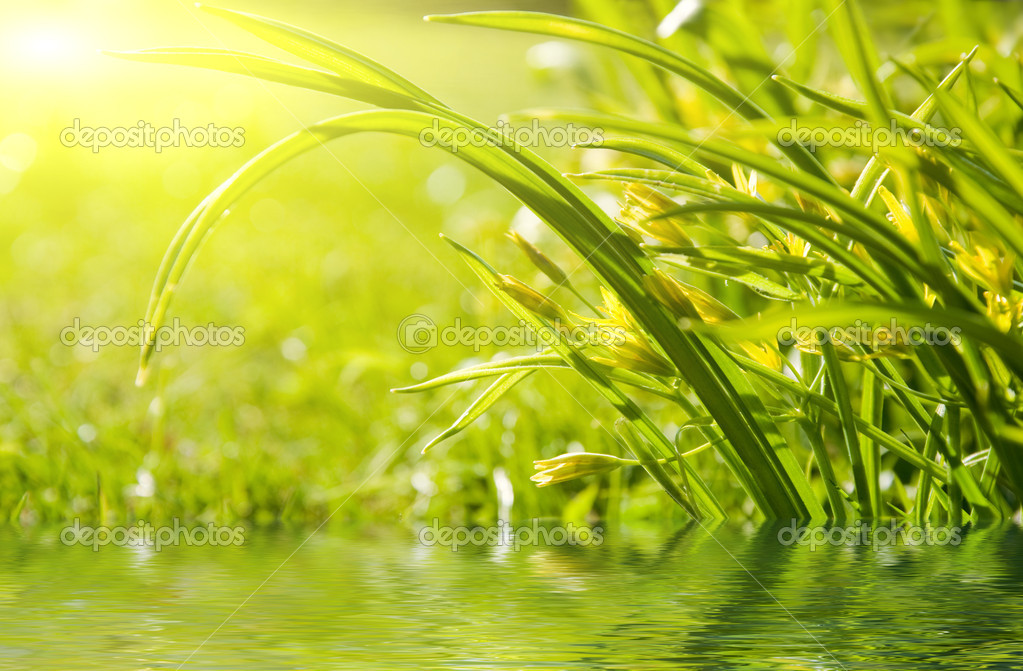 Green leaf reflected in water — Stock Photo #1953833