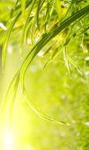 Garden grass, sunny morning — Stock Photo
