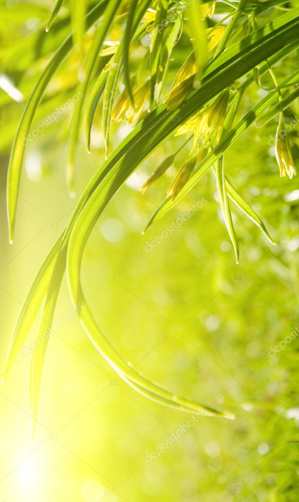 Garden grass, sunny morning — Stock Photo #1967509