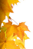 Autumn leaves (shallow dof) — Stock Photo
