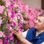 Senior man florist working in the garden — Stock Photo
