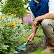 Man working in the garden — Stock Photo