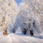 Snowy road — Stock Photo #1989996