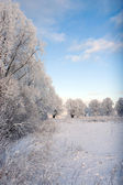 Snowy landscape — Stock Photo