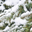 Fir branches — Stock Photo #1628873