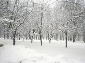 Po śniegu — Zdjęcie stockowe