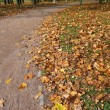 Autumn road in city park — Stock Photo