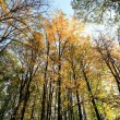 Trees in autumn — Stock Photo
