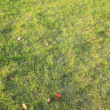 Grass at autumn — Stock Photo #1858392