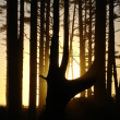 Sunset behind trees — Stock Photo
