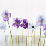estilo de vida con las flores — Foto de Stock