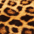 Stock Photo: Real leopard Skin