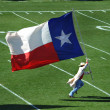 Stock Photo: Texas Flag
