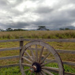 Wagon Wheel — Photo