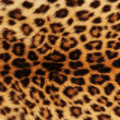 Stock Photo: Leopard Skin
