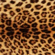 Leopard Skin — Stock Photo