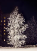 Birch in hoarfrost — Stock Photo
