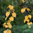 Stock Photo: Yellowed leaves