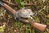 Gun and a bird — Stock Photo
