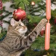 Cat and a fur-tree — Stock Photo